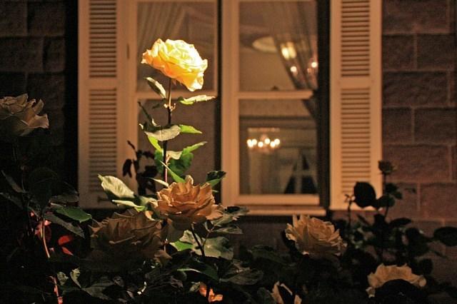 rose0940_x640.jpg