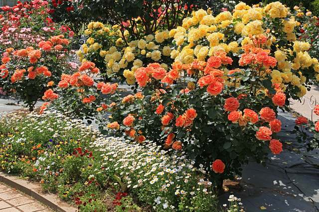 rose1108_x640.jpg