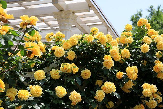 rose1126_x640.jpg