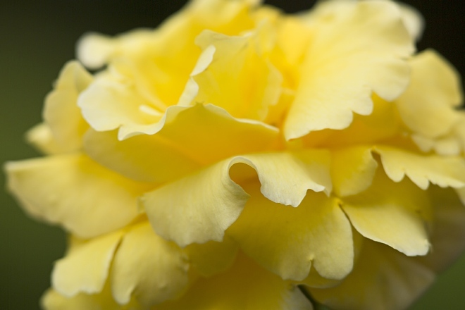 rose1425_x660.jpg
