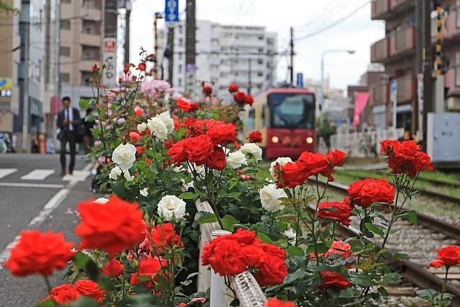 rose1910_x660.jpg