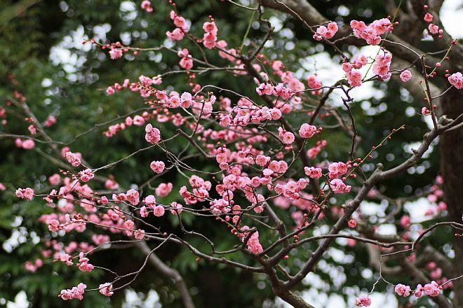 spring1207_x660.jpg