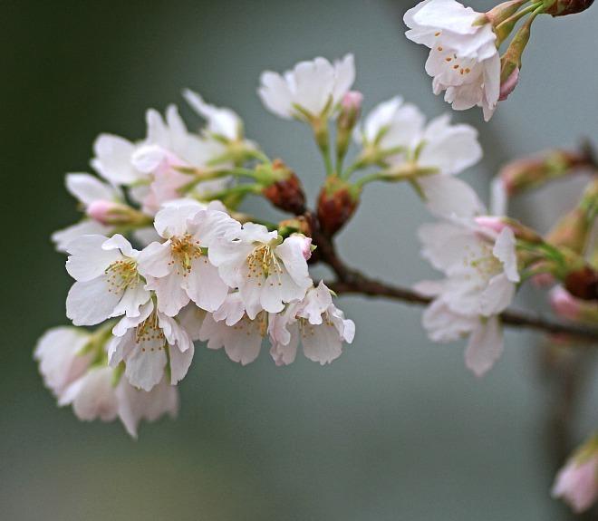 spring1211_x660.jpg