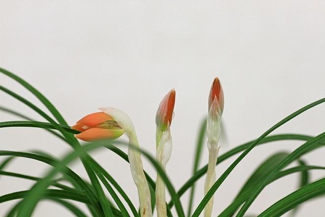 spring1234_x660.jpg