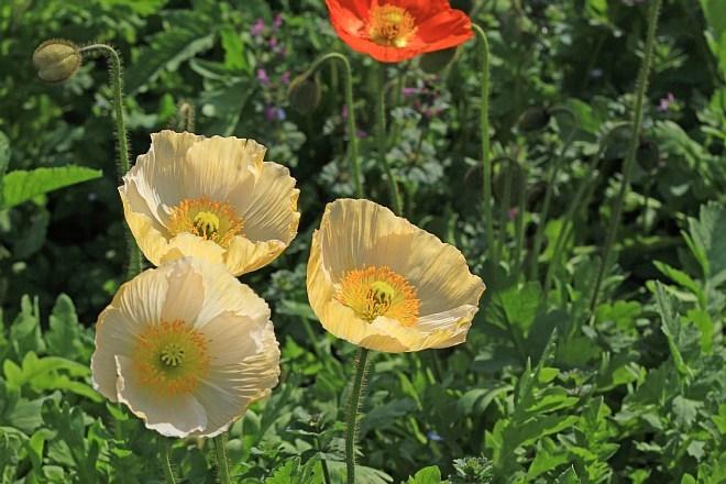 spring13b17_x660.jpg