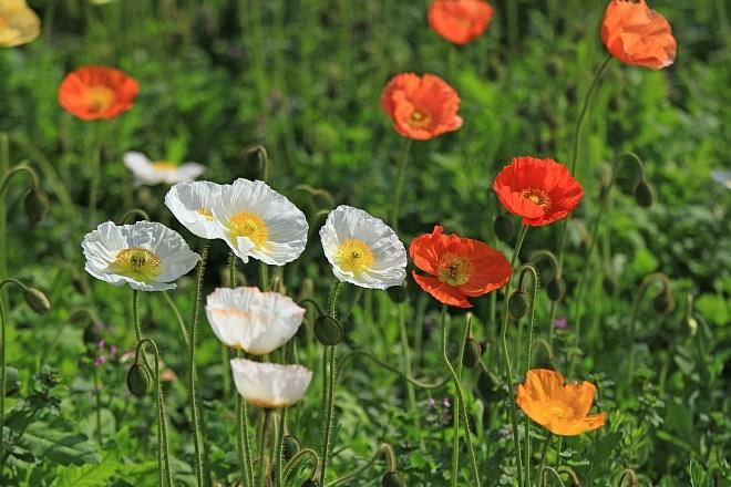 spring13b19_x660.jpg