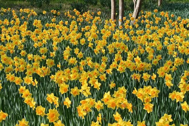 spring13b42_x660.jpg