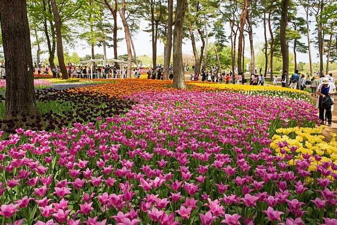 tulip1708_x660.jpg
