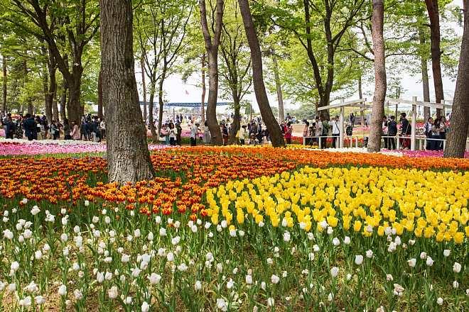 tulip1709_x660.jpg