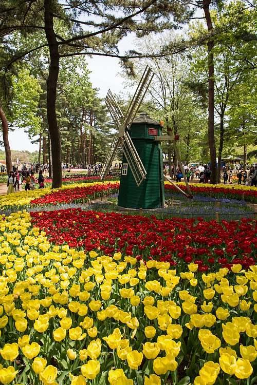 tulip1722_y8.jpg