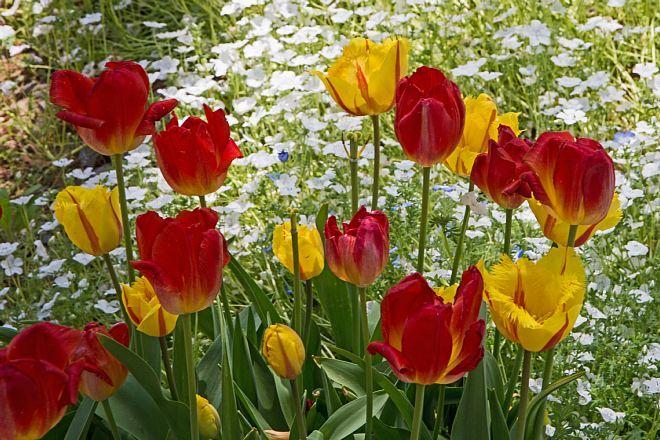tulip1724_x660.jpg