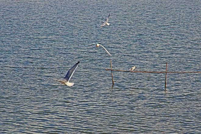 waterbird1211_x660.jpg
