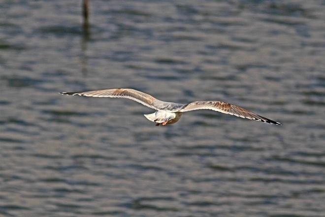 waterbird1216_x660.jpg