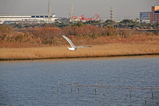 waterbird1220_x660.jpg