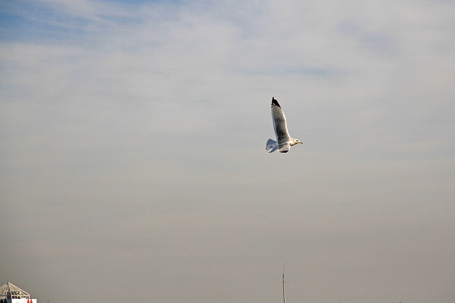 waterbird1221_x660.jpg