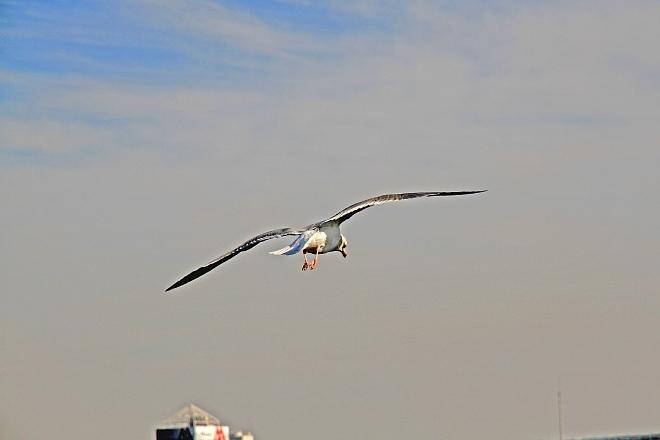 waterbird1222_x660.jpg