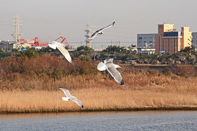 waterbird1234_x660.jpg